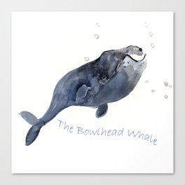 Bowlhead Whale Canvas Print