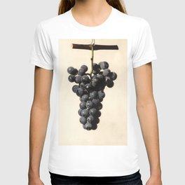 Vintage Concord Grapes Illustration T-shirt