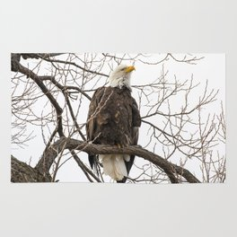 Curious Bald Eagle Rug