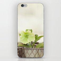 Heavenly Hellebore iPhone & iPod Skin
