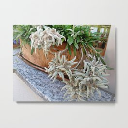 Switzerland Edelweiss Metal Print