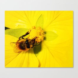 Honey Bee On Golden Wild Flower Canvas Print