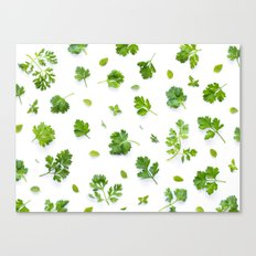 Herbs on White - Landscape Canvas Print