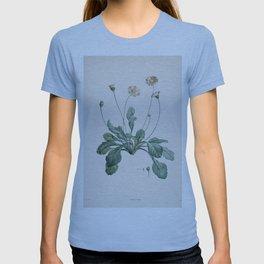 Daisy Flower Botanical Illustration T-shirt
