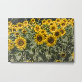 Sunflower Field | Floral Photography | Yellow Metal Print