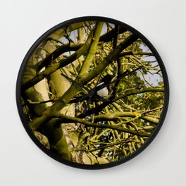 Magpie resting in a tree Wall Clock