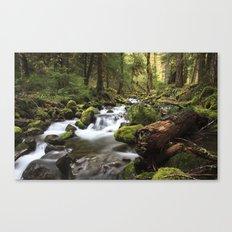 Paradise Creek IV Canvas Print