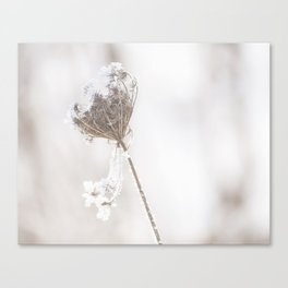 snowy queen anne's lace II Canvas Print