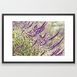 hummingbird + flowers Framed Art Print