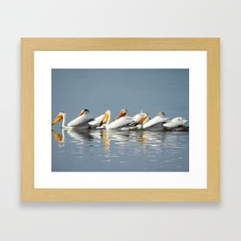 Conga Line of American Pelicans Framed Art Print