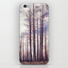 Highland Ponderosas iPhone & iPod Skin