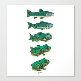 Salmon frog Canvas Print