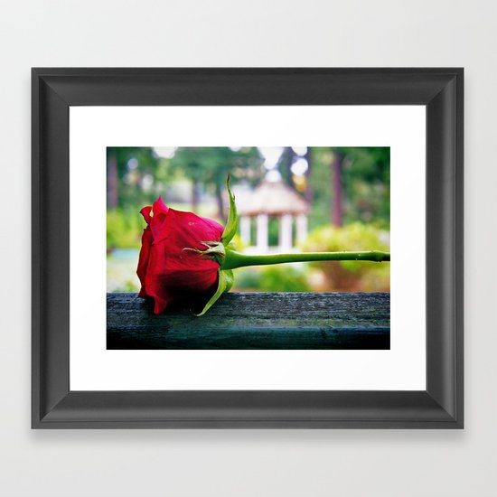 Last rose Framed Art Print