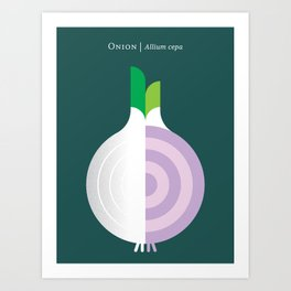 Vegetable: Onion Art Print