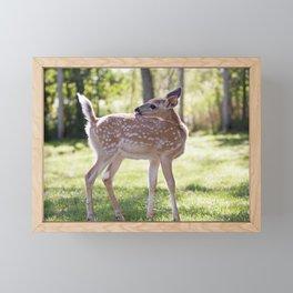 Fallow Deer Fawn 1 Framed Mini Art Print