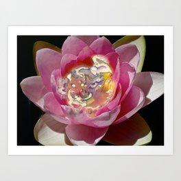 Fairy Lily Art Print