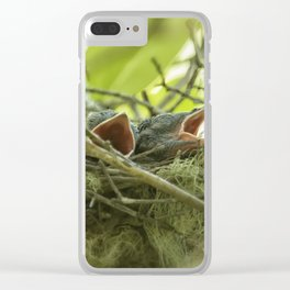 Hungry Newborn Steller's Jays Clear iPhone Case