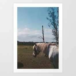 Horse in fly storm Art Print