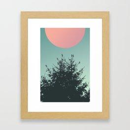 Pine tree and birds Framed Art Print