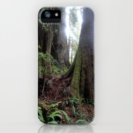 Giant Redwoods Rainforest 04 iPhone Case
