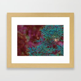 Surreal Japanise Ahorn Tree Framed Art Print