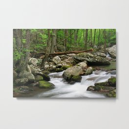 Sounds of the Forest Metal Print