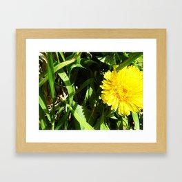 A Yellow Flower Framed Art Print