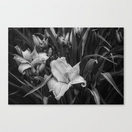 Orange Daylilies bw Canvas Print