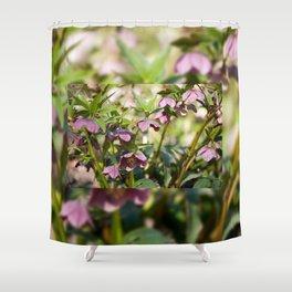 Helleborre purple dark bloom Shower Curtain