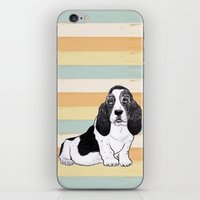 the hound iPhone & iPod Skins featuring Basset Hound by Tammy Kushnir