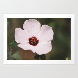 Floral 23 #flower Art Print