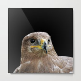 Buzzard on Black Metal Print