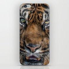 Tiger's Eyes iPhone & iPod Skin
