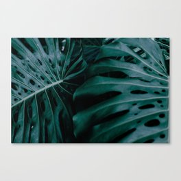 monstera ultramarine duo Canvas Print