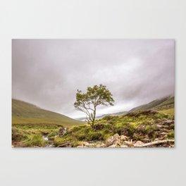 Mountain Ash Canvas Print