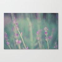 lavender Canvas Prints featuring Lavender by Light Wanderer