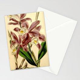 Cattleya intermedia Stationery Cards