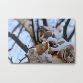 Snowy Birch Tree Metal Print