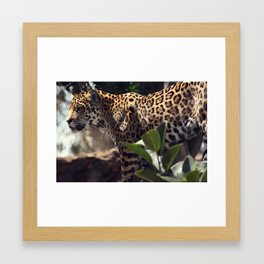 jaguar stare Framed Art Print