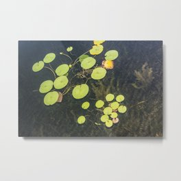 Water Greens Metal Print