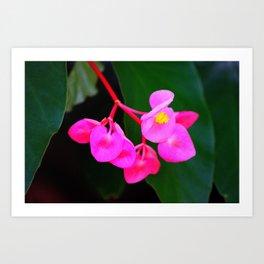 Bold Flower Art Print