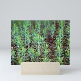 Small forest Mini Art Print