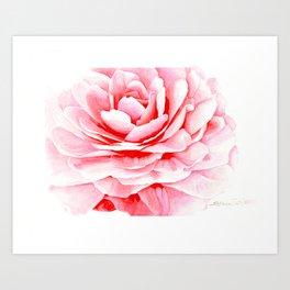 Watercolor Pink Camellia Art Print
