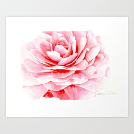 Watercolor Pink Camellia Art Print