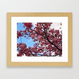 Cherry Blossoms IV Framed Art Print