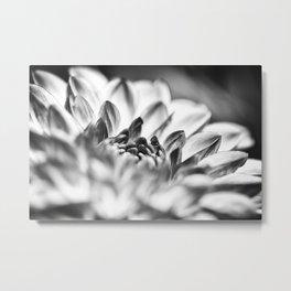 White Dahlia Macro Metal Print