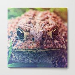 HollyWood Toad Metal Print