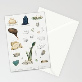 Sea squirt varieties set  from Mollusca  Shells by Augustus Addison Gould Stationery Cards