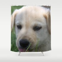 lab Shower Curtains featuring Yellow Lab by Tracy Lynn Hart Photography