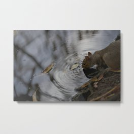 Sipping Squirrel Metal Print